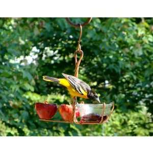 Fruit and Jelly Feeder (Bird Feeders) (Fruit and Jelly